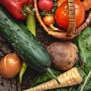 自家農園で育てた新鮮野菜